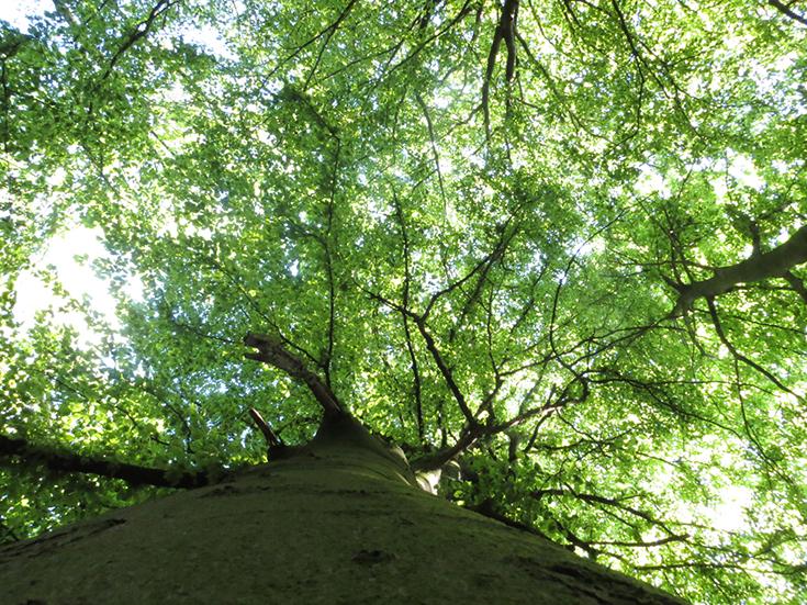 Bäume in Düsseldorf
